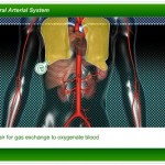 Peripheral Arterial System Screenshot