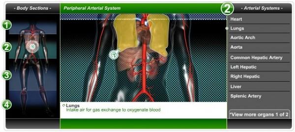 Peripheral Arterial System Screenshot